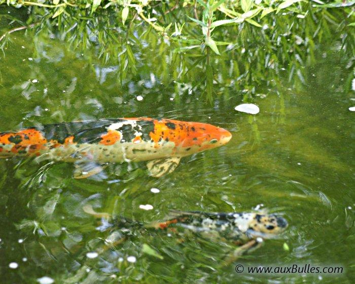 Bassin de jardin la visite du bassin de jardin de pascal for Cloture bassin poisson