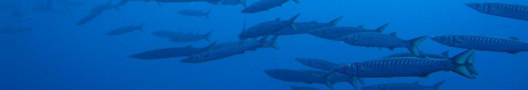 La Flore Et La Faune Sous Marines Requin Citron Negaprion Brevirostris