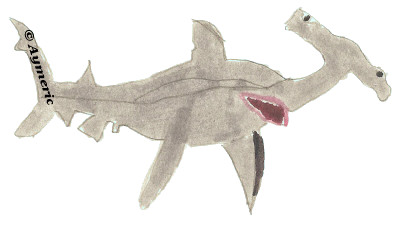 Le requin marteau, une illustration d'Aymeric