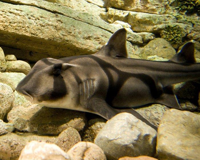 La Flore Et La Faune Sous Marines Requin Dormeur Taureau